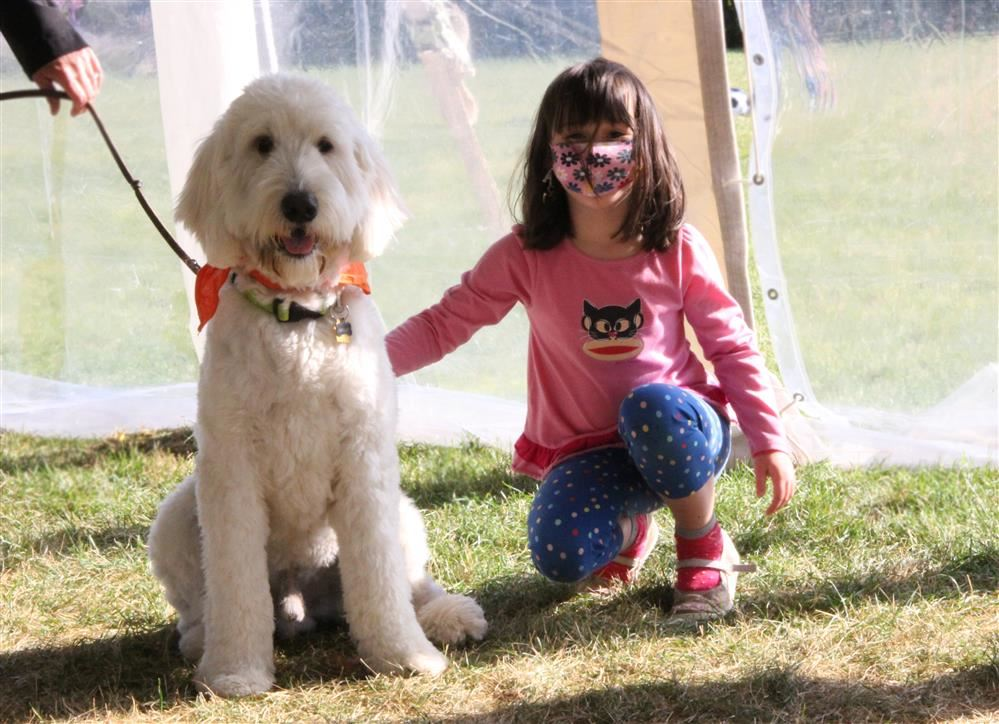 Krieger the Golden Doodle is greeted by Ellie Long, a 1st grade student at Greenbriar School, durin